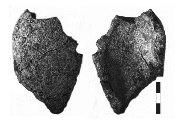Stone pine (Pinus pinea) – fragment of seed, MAC, locus 169, scale 3 mm