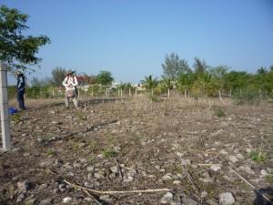Jonathan en un sembradío de maíz levantando una bolsa llena de materiales arqueológicos.