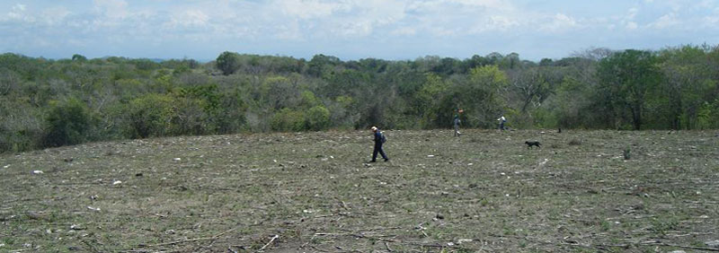 Pedestrian survey, archaeologists are walking the terrain at a 20 met